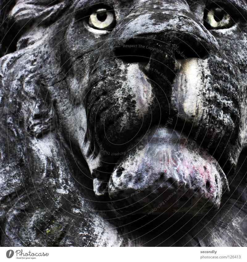 ergrauter Löwe Saurer Regen Statue Trauer schwarz Tier Verzweiflung Säugetier historisch Stein Traurigkeit Tränen alt Auge