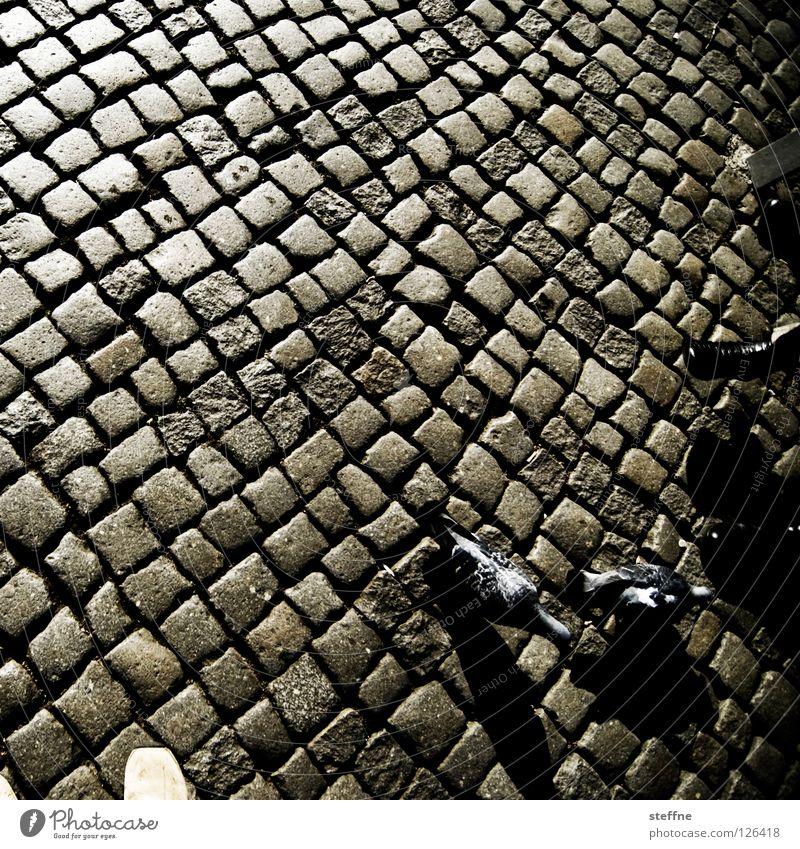 Mein Weg ist gepflastert mit Vögeln Quader Quadrat pflastern Stadt Spaziergang Platz Erholung Sonntag Taube Vogel Parkbank Pause gehen Schuhe Stiefel glänzend