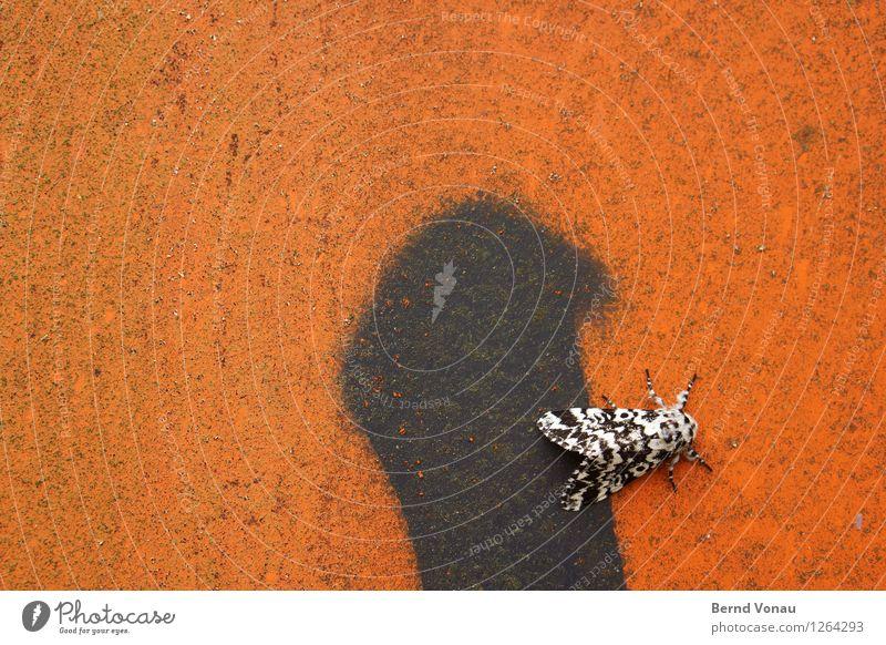 kunstfreund Mauer Wand Tier Flügel 1 hell Schwarzweißfoto Graffiti rot Schmetterling Kontrast Insekt Farbfoto Außenaufnahme Nahaufnahme Menschenleer