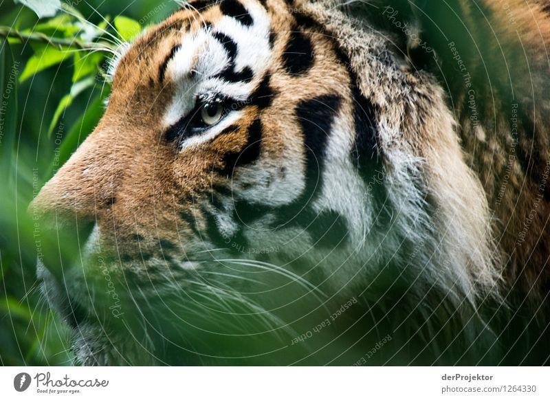 Das Ziel vor Augen *950* Natur Pflanze Sommer Landschaft Tier Wald Umwelt Freiheit Kraft wandern Erfolg ästhetisch Schönes Wetter Coolness Macht sportlich