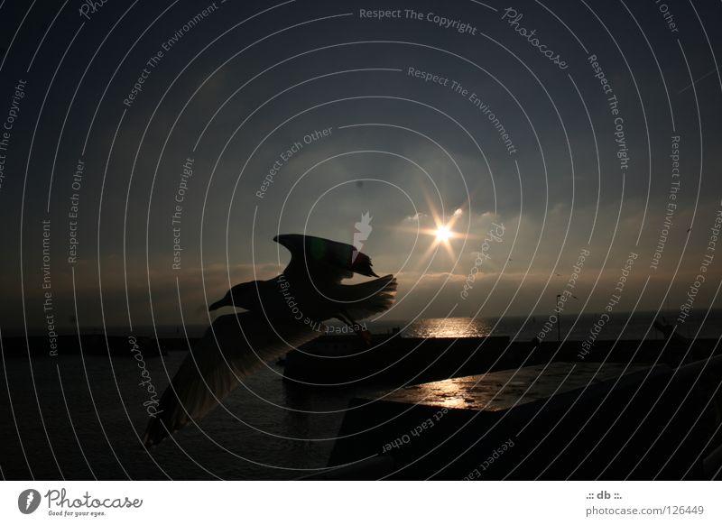 .:: unlimited liberty ::. Himmel Sonne Meer Winter Wolken Herbst Hafen