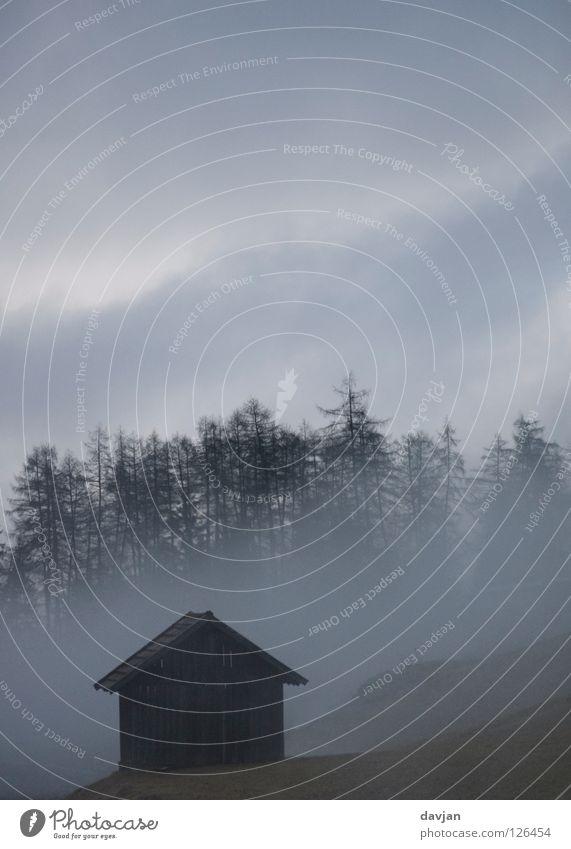 Morgengrauen Baum Winter Wolken Einsamkeit Wald dunkel grau Angst Nebel gefährlich gruselig Hütte Baumkrone Panik