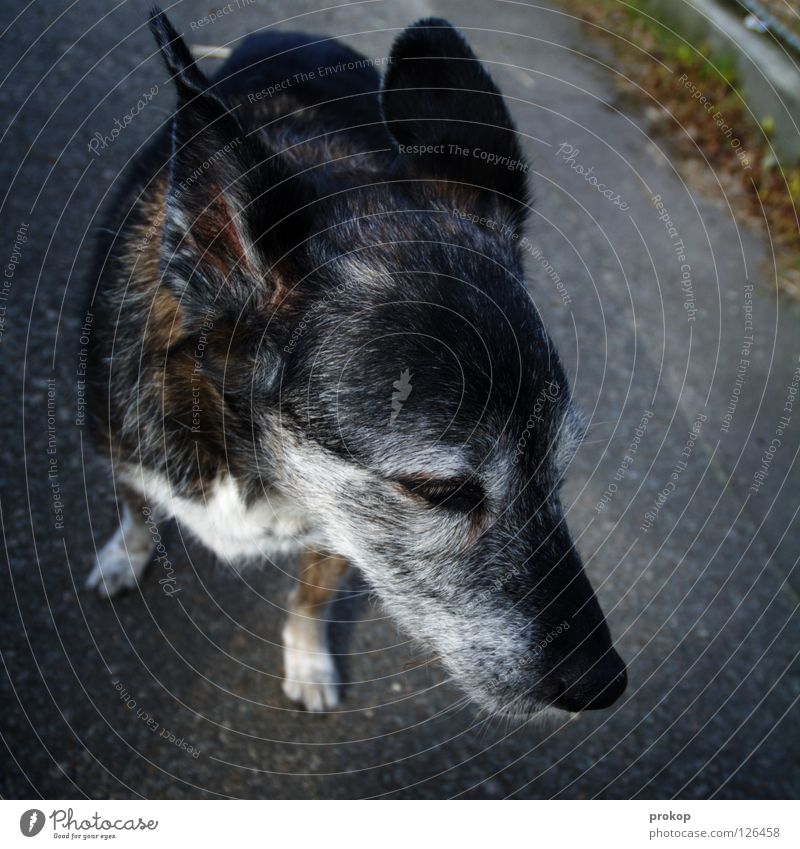 Rentnerin auf Abwegen Hund Straße grau Wege & Pfade Haare & Frisuren warten stehen Spaziergang Ziel Ohr Fell Jahr Ruhestand Säugetier Weisheit Wimpern