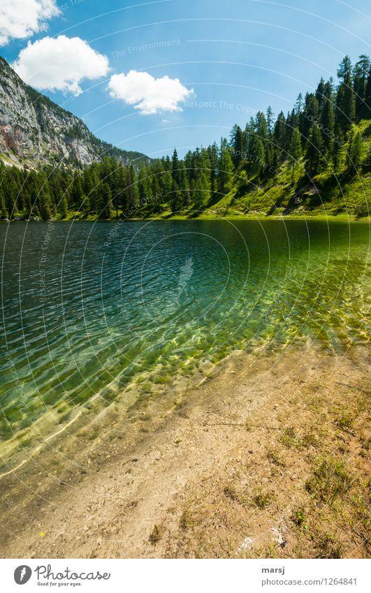 Geheimtipp Natur Ferien & Urlaub & Reisen grün Sommer Wasser Erholung ruhig kalt Leben Glück Freiheit See Tourismus Idylle Ausflug Schönes Wetter