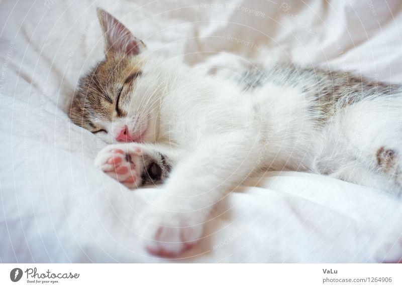 Zzzzz Bett Tier Haustier Katze Tiergesicht Fell Pfote 1 Tierjunges liegen schlafen träumen hell braun rosa weiß Geborgenheit Tierliebe ruhig Katzenbaby Farbfoto