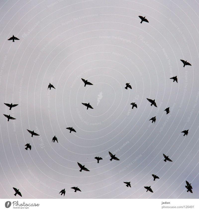 31 Himmel Ferne Vogel fliegen Ausflug Ordnung Luftverkehr Flügel Abheben Brandenburg Schwarm Vogelschwarm