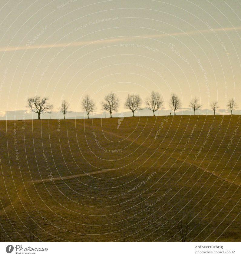 Aufgereiht Himmel Baum Sonne grün Winter Einsamkeit Schnee Wiese Berge u. Gebirge Landschaft ohne karg Schwarzwald Kondensstreifen nachsichtig