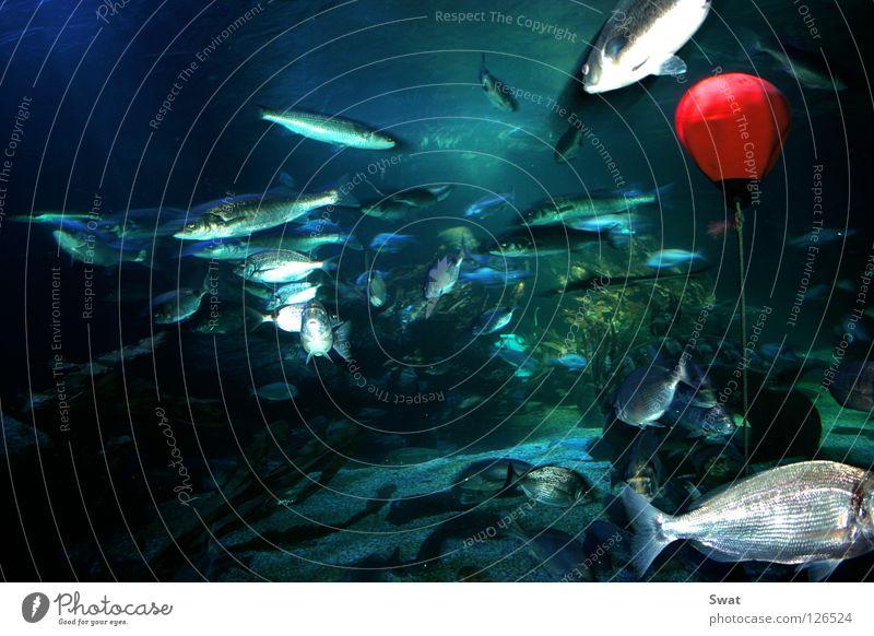 fisheye Wasser Meer grün blau rot Fisch Unterwasseraufnahme Algen Boje Fischauge