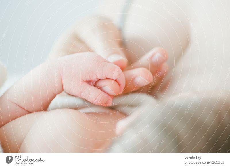 Precious I Mensch Hand Erwachsene Leben Familie & Verwandtschaft Zusammensein Kindheit Zukunft Baby Finger Warmherzigkeit Schutz Sicherheit Mutter Vertrauen