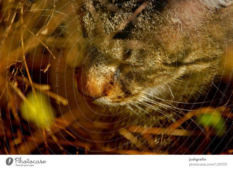 Katze im Busch Tier Farbe ruhig Leben Freiheit frei Nase schlafen Sträucher weich Bart Zweig Haustier Säugetier Hauskatze