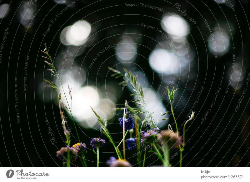 °° Oo°Oo°°° Lifestyle Pflanze Frühling Sommer Blume Gras Park Unschärfe Lichterscheinung Blühend verblüht dehydrieren dunkel schön natürlich Farbfoto