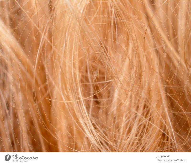 blond Mensch Haare & Frisuren Makroaufnahme
