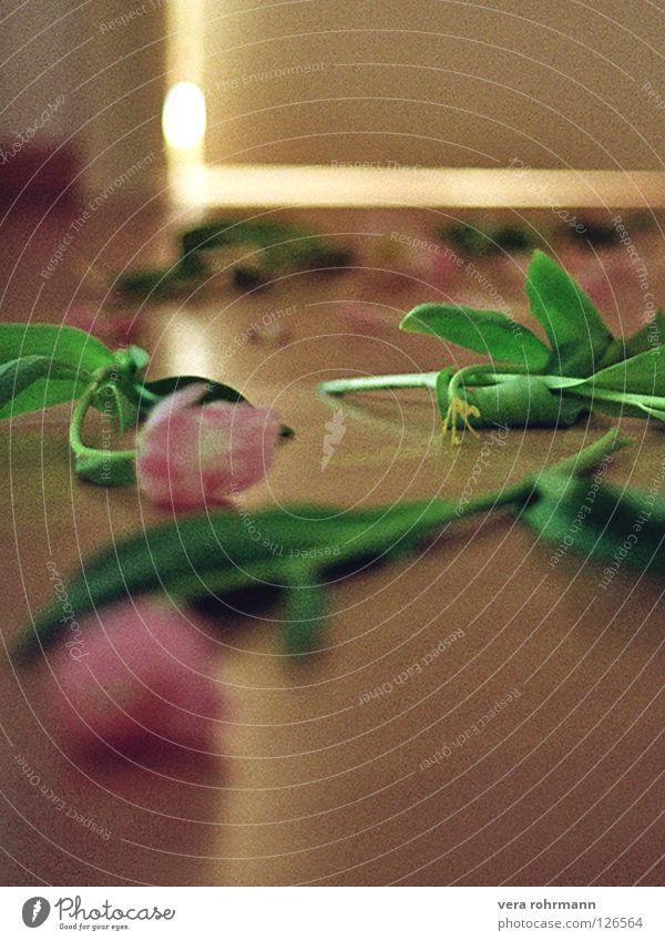 tulpen Blume Wege & Pfade Tür Tulpe Pollen Schlafzimmer Blütenblatt Türspalt