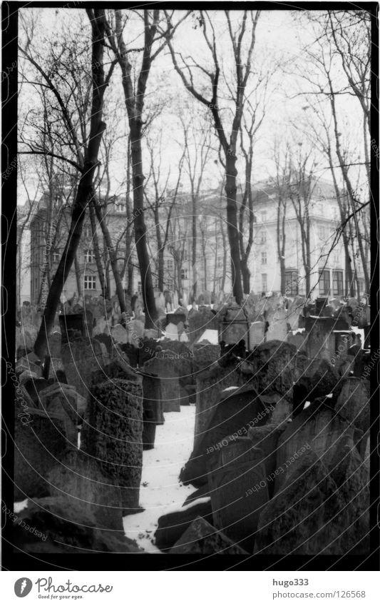 Old Jewish Cemetery Friedhof Grab Prag Grabstein Trauer Baum ruhig Gebet Winter Grabinschrift Tod mehrere Haus Verzweiflung Europa Prague Traurigkeit