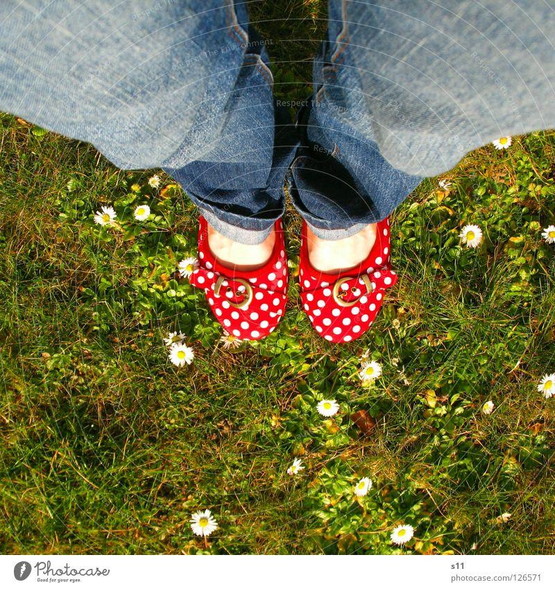In Her Shoes II Frau Natur blau weiß grün rot Pflanze Sommer Blume Erwachsene Wiese Gras Frühling Blüte Fuß 2