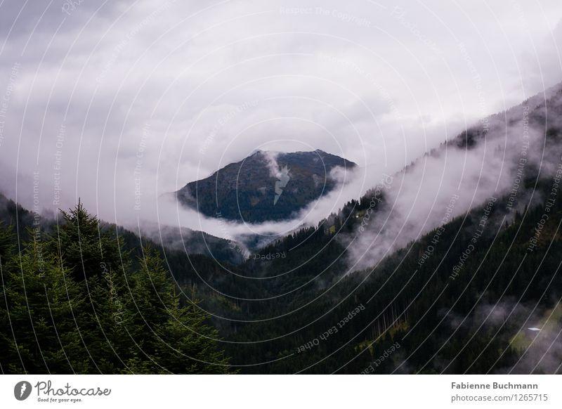 Wald und Wolken II Natur Landschaft Pflanze Herbst schlechtes Wetter braun grau grün weiß Nadelwald Gipfel Fichtenwald Wolkenverhangen dunkel dunkelgrün Tanne