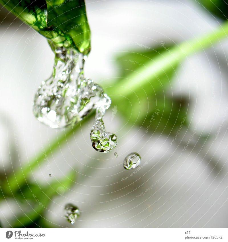 Erfrischung Pur II Natur Pflanze grün Wasser kalt Gesundheit Wassertropfen nass Reinigen Tropfen Bad Klarheit rein Schifffahrt Durst