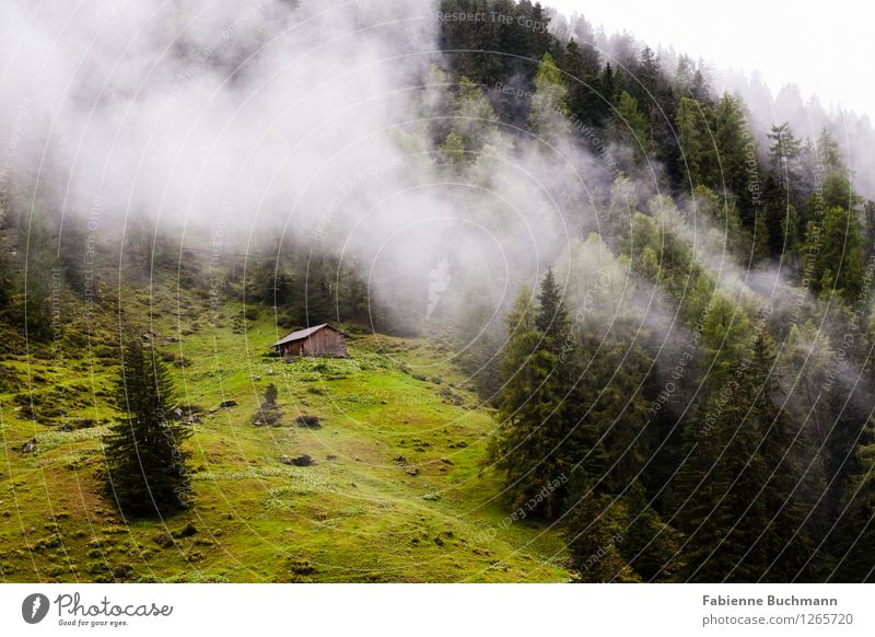 Wald und Wolken Umwelt Natur Landschaft Pflanze Herbst schlechtes Wetter Nebel Alpen Berge u. Gebirge Hütte braun grau grün Nadelwald Baum Holzhütte Wiese Weide