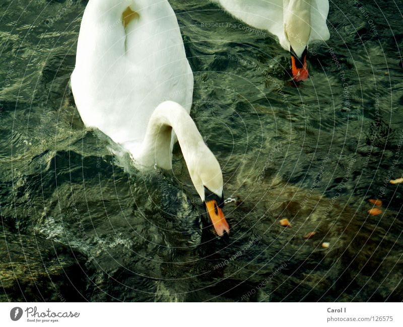 Sturmwarnung!!!!! blau Wasser grün weiß Tier dunkel Leben See Vogel Schwimmen & Baden Wellen Wind dreckig gefährlich Ernährung Eisenbahn