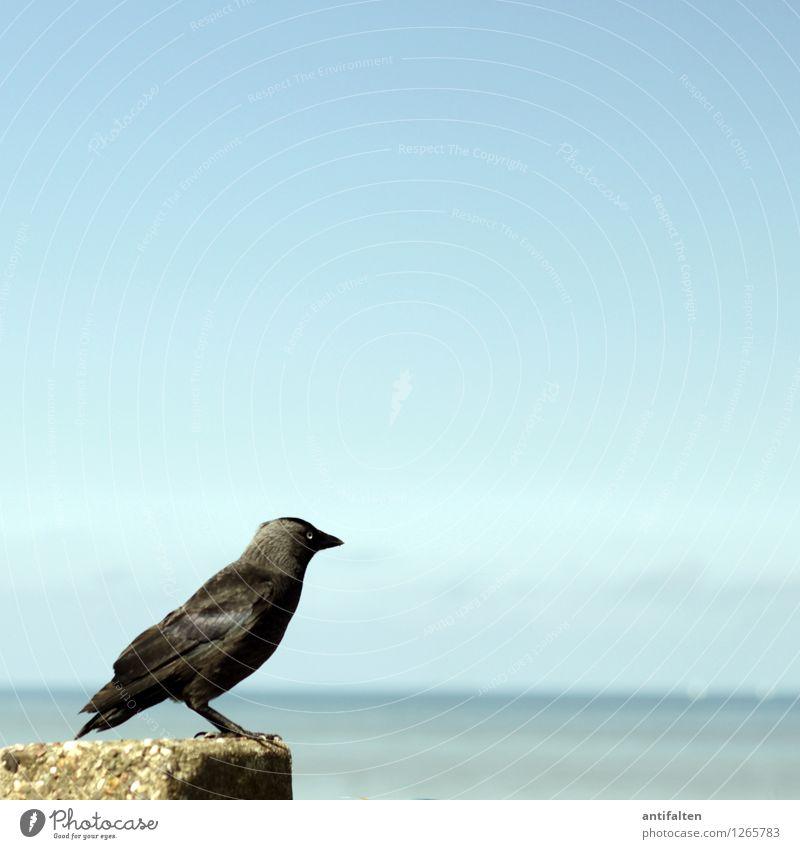 Vogelperspektive Ferien & Urlaub & Reisen Ferne Freiheit Sommer Sommerurlaub Sonne Sonnenbad Strand Meer Nordsee Natur Wasser Himmel Wolkenloser Himmel