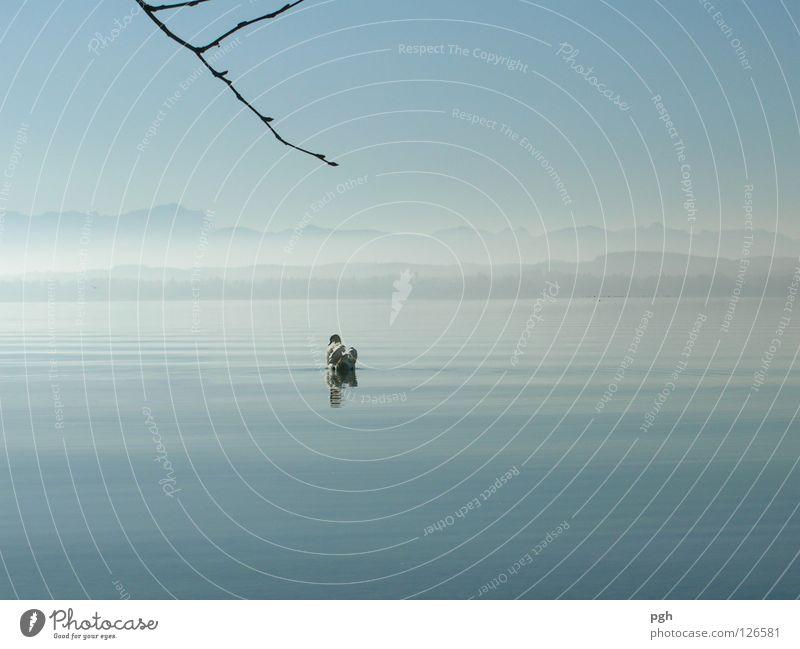 Wohin des Weges? Schwan Sonnenuntergang Starnberger See Stimmung Nebel Wasser Himmel blau Stein Ast Berge u. Gebirge