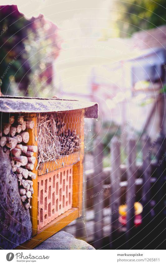 insektenhotel Freizeit & Hobby Ferien & Urlaub & Reisen Tourismus Häusliches Leben Wohnung Haus Garten Umwelt Natur Pflanze Tier Sonne Schönes Wetter Blatt