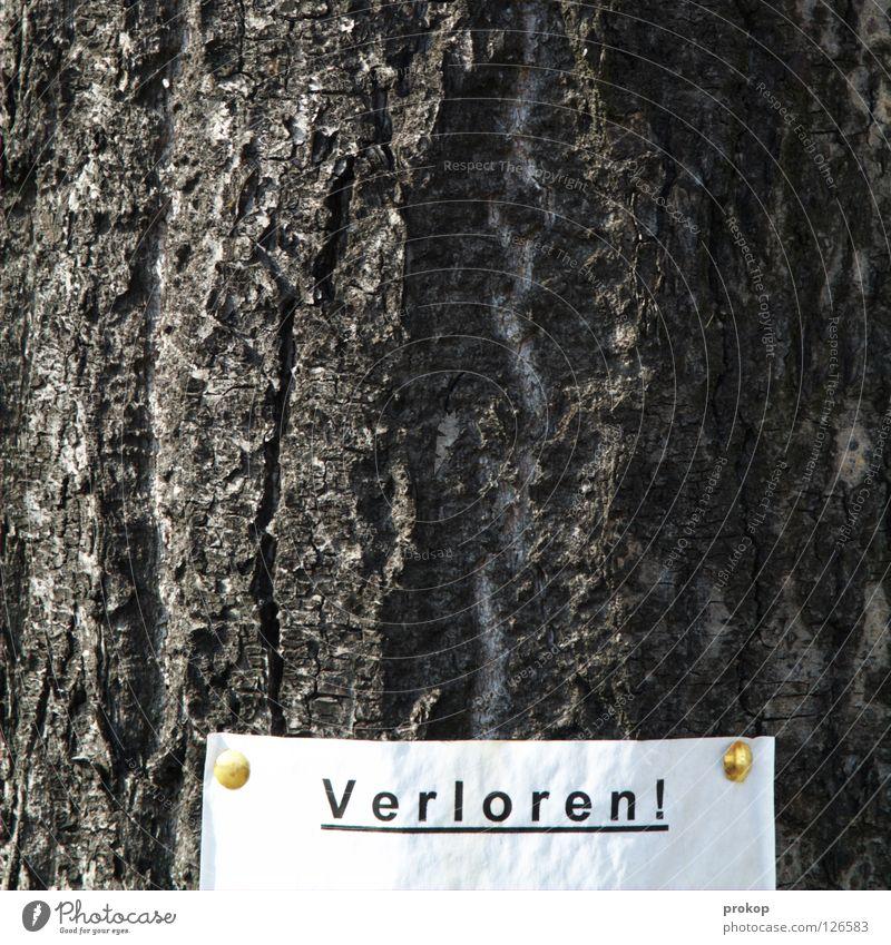Viel Glück Baum Einsamkeit Suche Papier Schriftzeichen Trauer Buchstaben Sammlung Wort Verzweiflung Zettel Stadtteil verloren Text finden verlieren