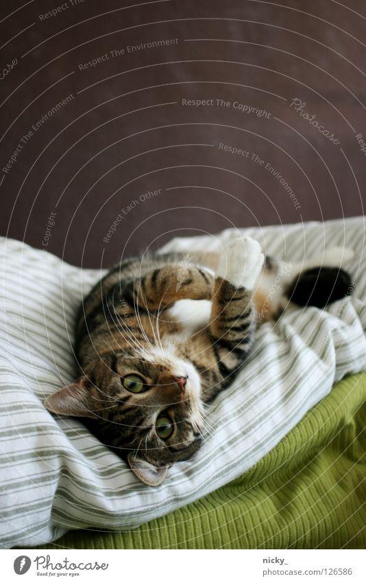 kitten is high grün Auge Tier Katze Nase Bett Fell Säugetier Haustier lieblich