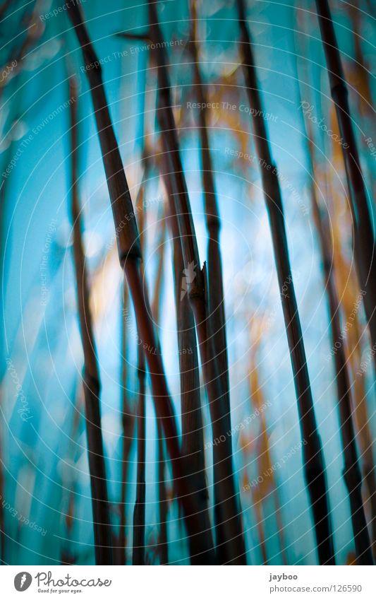 Sträucher Himmel blau gelb dunkel Gras Wärme Linie hoch Physik lang