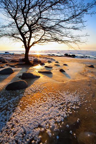 Baum nahe den Steinen auf einem gefrorenen roten Sand Himmel Natur Ferien & Urlaub & Reisen blau schön Farbe weiß Sonne Erholung Meer Landschaft Strand Winter