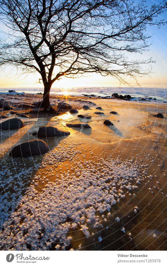 Baum nahe den Steinen auf einem gefrorenen roten Sand schön Erholung Ferien & Urlaub & Reisen Sonne Strand Meer Winter Schnee Natur Landschaft Himmel Horizont