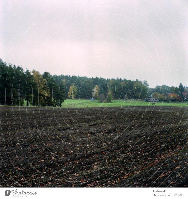 Oktober Wald Waldrand Feld ländlich Mittelformat Landwirtschaft pflügen Herbst grau Regen November Nadelwald Bauernhof Dorf Amerika Provinz Sand Erde Natur