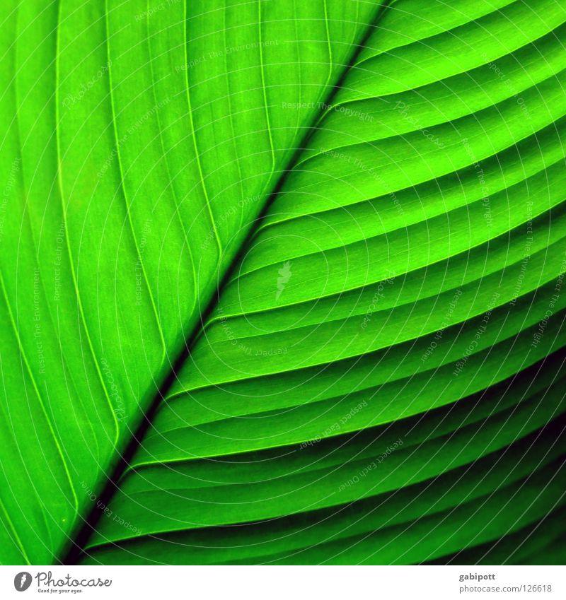 Blatt ohne Namen Farbfoto Außenaufnahme Nahaufnahme Detailaufnahme Makroaufnahme Muster Strukturen & Formen Menschenleer Natur Pflanze Blume Urwald Linie