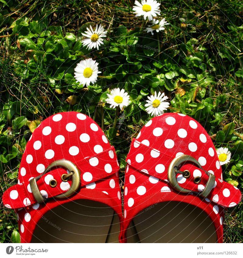 Die Schuhe Meiner Schwester rot weiß grün Punkt gepunktet Schnalle Wiese Gras Blume Blüte Gänseblümchen Pflanze 2 Bekleidung gehorsam Vogelperspektive