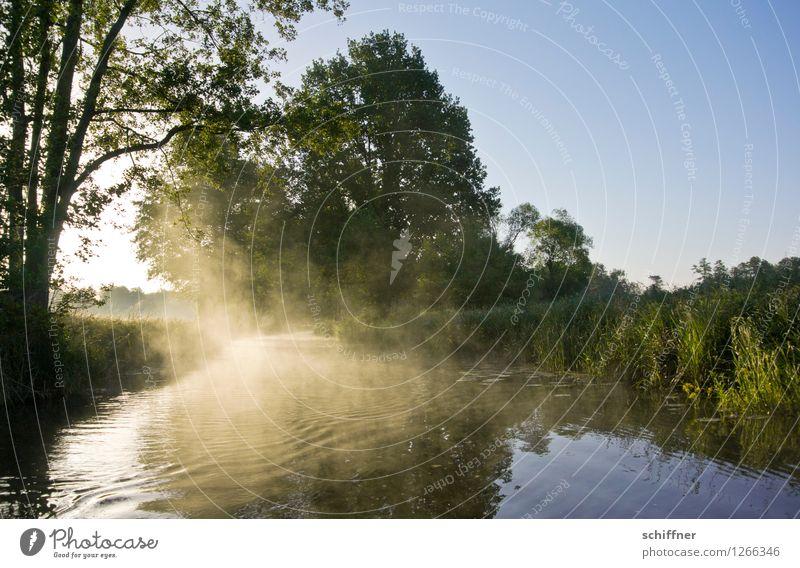 Spreedorado | dekorativ kriechender Morgennebel Umwelt Natur Landschaft Pflanze Wolkenloser Himmel Sonnenaufgang Sonnenuntergang Sonnenlicht Schönes Wetter