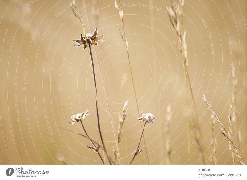 im Verborgenen Natur Pflanze schön Sommer Erholung Gefühle Wiese Gras Stil Glück Kunst hell Zufriedenheit Design ästhetisch Energie