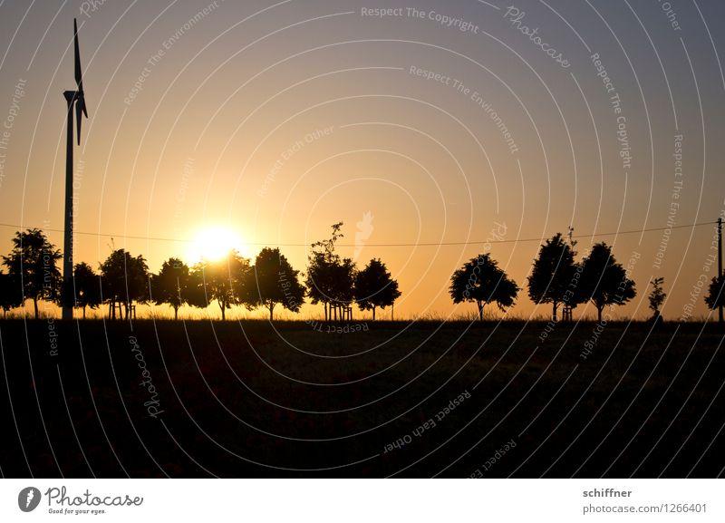 Spreedorado | einer tanzt immer aus der Reihe Windkraftanlage Landschaft Sonne Sonnenlicht Sommer Schönes Wetter Pflanze Baum Wiese Feld schwarz Baumreihe