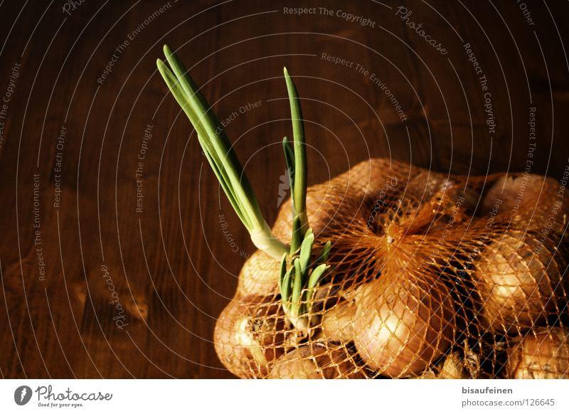 Ausbruch Gemüse Pflanze Holz Netz Wachstum frisch rebellisch braun grün entkommen Zwiebel Zwiebelnetz Trieb Ernährung Sack austreiben pflanzlich Innenaufnahme