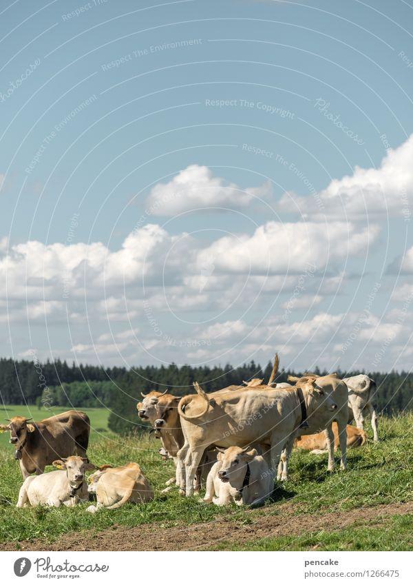 Küa scheener wiad Mädle Natur Landschaft Urelemente Erde Himmel Wolken Sommer Schönes Wetter Wiese Feld Berge u. Gebirge Allgäu Tier Haustier Tiergruppe Herde