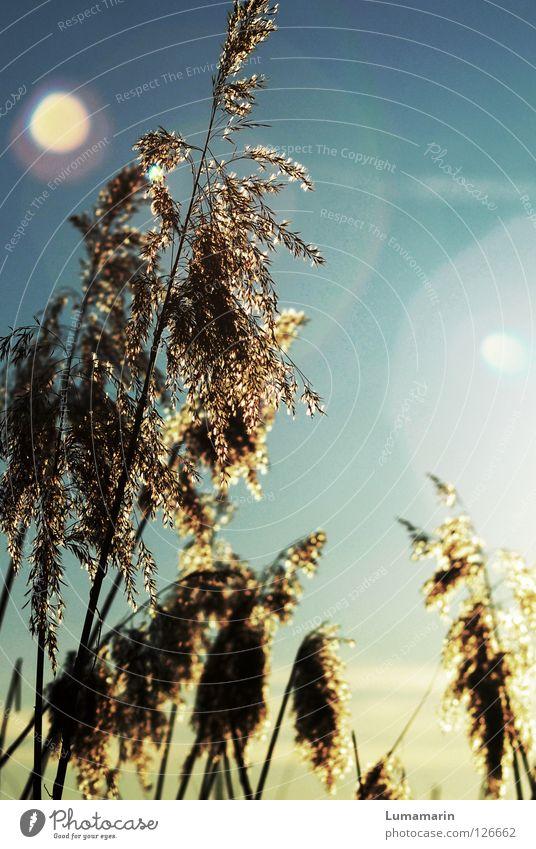 Gräserzauber schön Himmel Sonne Pflanze Winter ruhig Lampe Gras Traurigkeit Wärme Luft Beleuchtung Kraft glänzend Wind Hoffnung
