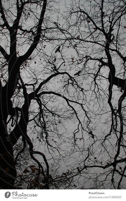 Panik Stil Design ruhig Ferien & Urlaub & Reisen Tourismus wandern Natur Landschaft Tier Herbst Sturm Baum Wald Urwald Vogel Tiergruppe Traurigkeit Aggression