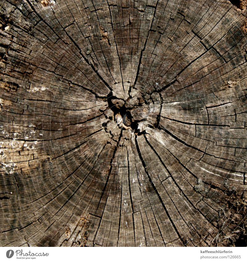 Chronologie Baum Jahresringe gefallen Holz braun Riss Polarisation Baumringe alt Nahaufnahme