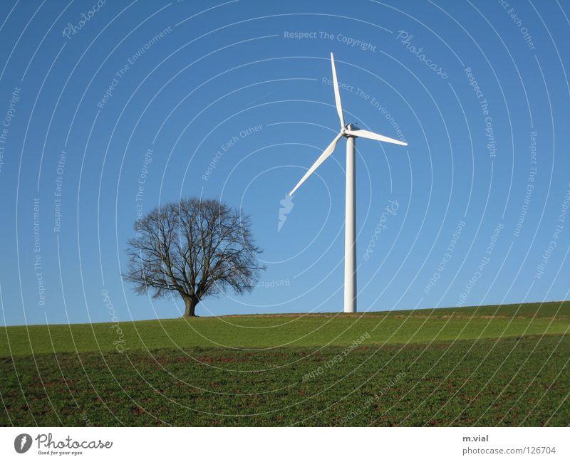 David und Goliath Baum Windkraftanlage Himmel Wiese Feld Natur Landschaft Elektrizität grün weiß blau