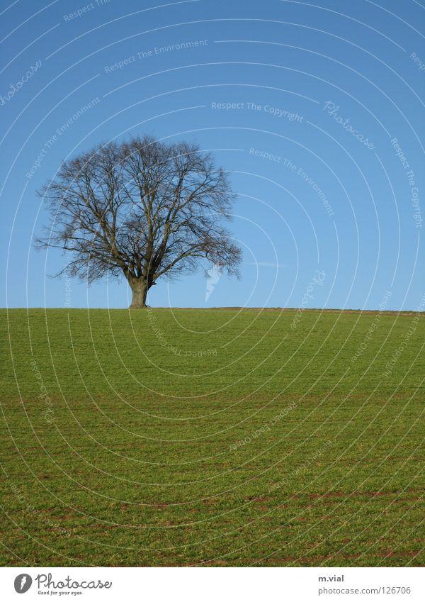 Einsamer Baum Natur Himmel grün blau Einsamkeit Wiese Landschaft Feld