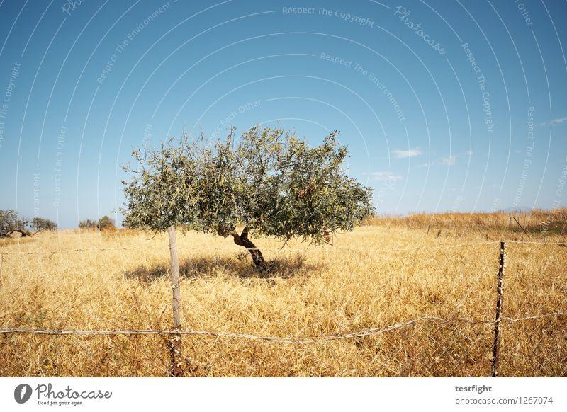 Baum Himmel Natur Pflanze Sommer Landschaft Sonne Tier Einsamkeit Wärme Umwelt Gras Sträucher