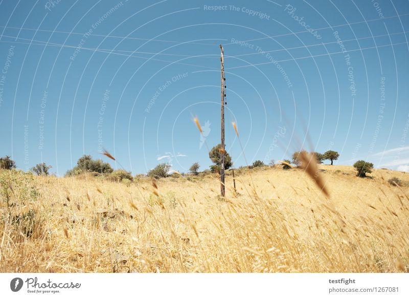 landschaft Umwelt Natur Landschaft Pflanze Sonne Sommer Baum Gras Sträucher genießen verblüht Kabel Strommast Farbfoto Menschenleer Textfreiraum oben Licht
