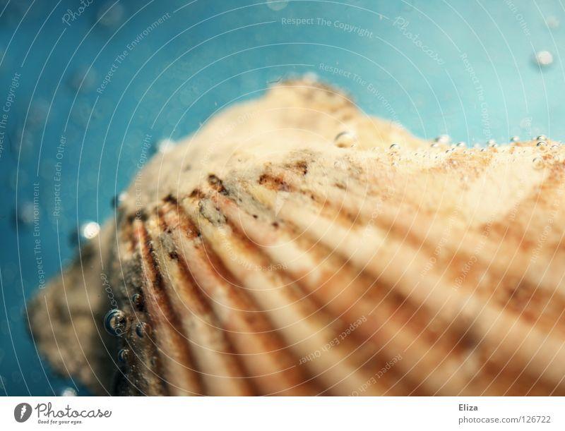 Muschel Natur blau schön Ferien & Urlaub & Reisen Meer Sommer Strand Erholung Umwelt Sand Wellen Glas frisch Wassertropfen Fisch Dekoration & Verzierung