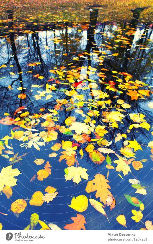 Herbstblätter, die in Wasser schwimmen Natur Pflanze Farbe Baum Blatt Wald gelb See hell gold Jahreszeiten Fluss Teich Pfütze Oktober