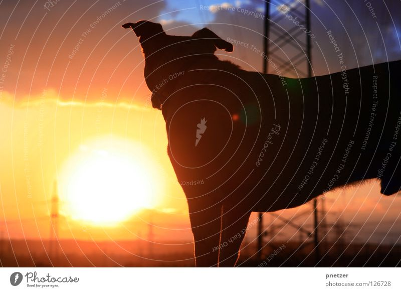 Well we're out there having fun... schön Sonne rot Freude schwarz Tier gelb Hund orange Feld gehen Elektrizität Spaziergang Strommast Labrador