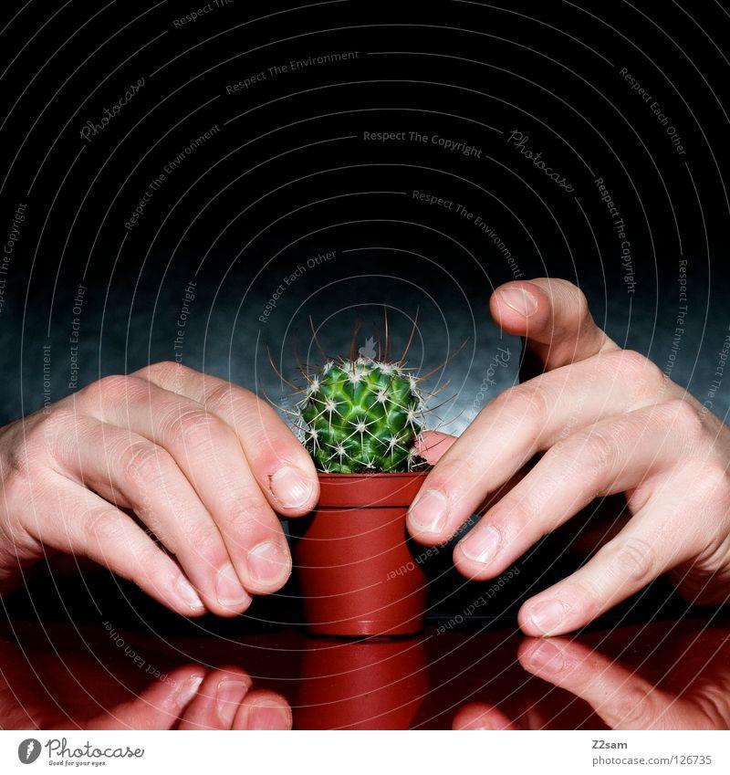 ich halt dich fest Mensch Natur Hand grün Pflanze rot schwarz dunkel braun Angst lustig glänzend Finger verrückt Tisch Spitze